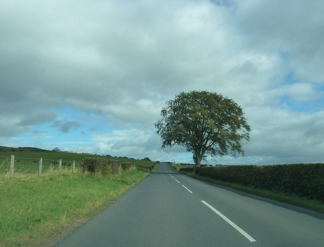 B6357 and lone tree
