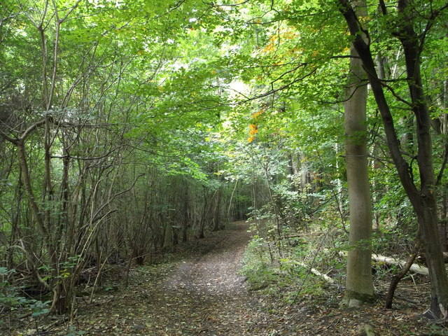 Footpath in Elliston Bottom Wood