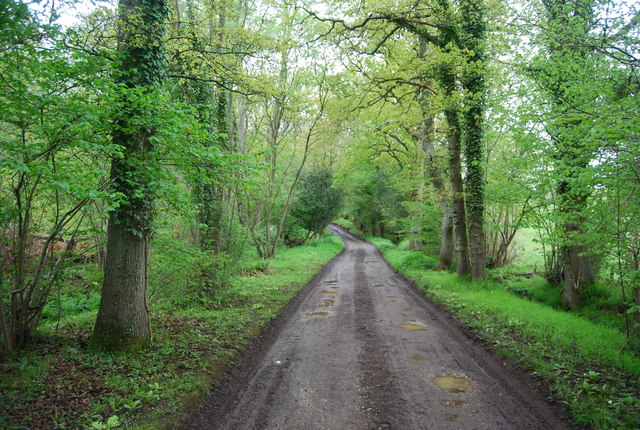 Wey South Path, Three Corner Copse