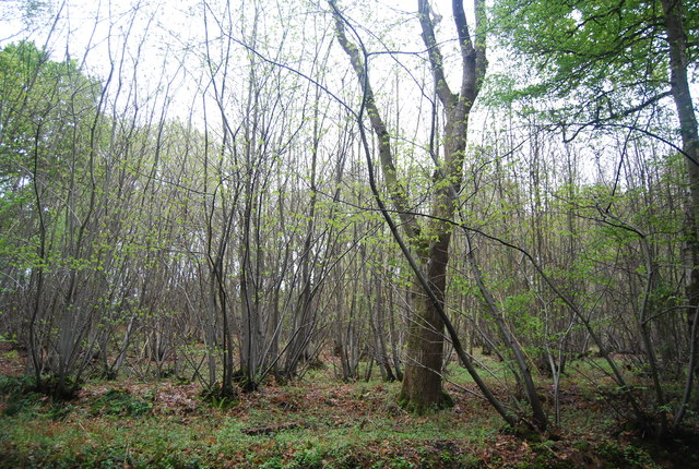 Three Corner Copse
