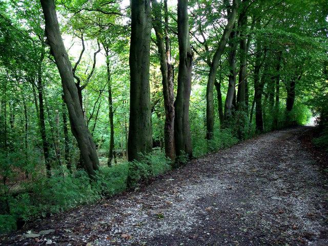 Tree-lined lane