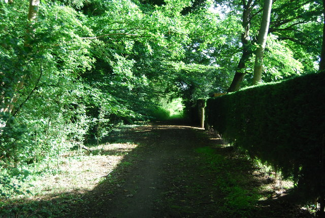 Wey South Path