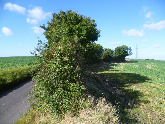 Field alongside Rabbits Road