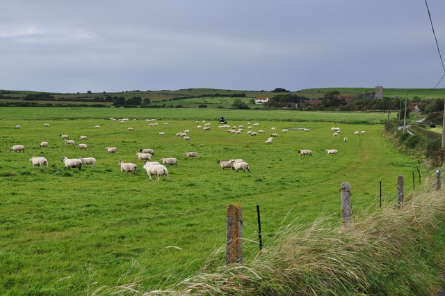 North Somerset : Grassy Field & Sheep Grazing