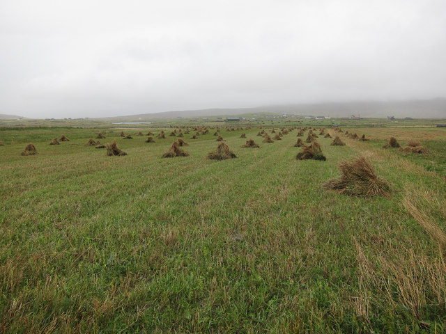 Stooks on the machair