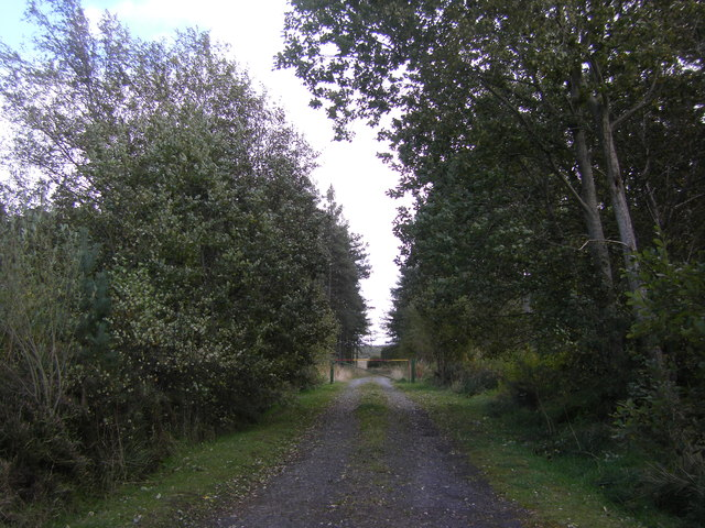 Forestry track, Swinnie Plantation