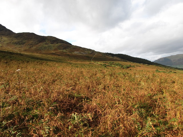 Bracken infestation on the Carlingford Commons