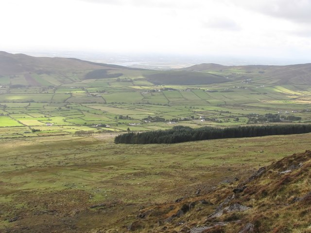 Forests and grazing sheep on the lower, western, slopes of Slieve Foye
