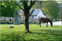 SX7176 : Ponies at Widecombe by Graham Horn