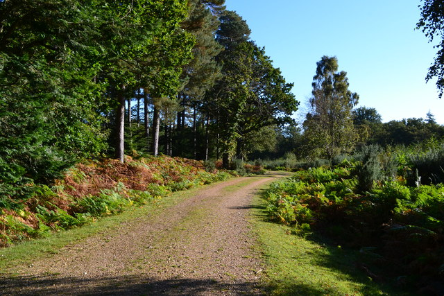 Forest track near Ladycross Lodge