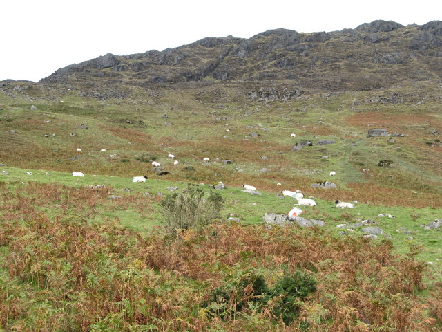 Sheep grazing below the crags of Slieve Foye