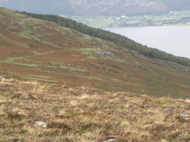 The Tain Way descending towards Carlingford