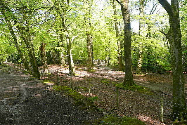 Woodland at Quick Bridge