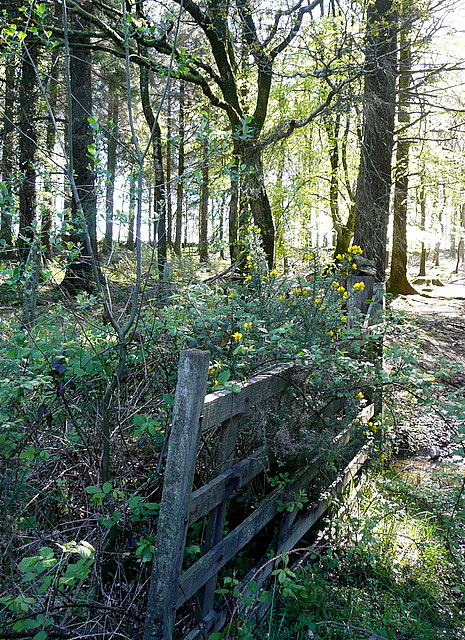 Access to Sheraleer's Wood