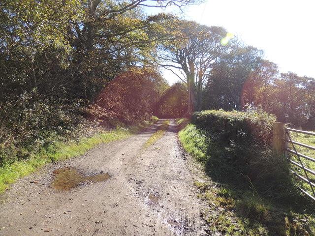 Mull of Galloway Trail near High Barnultoch