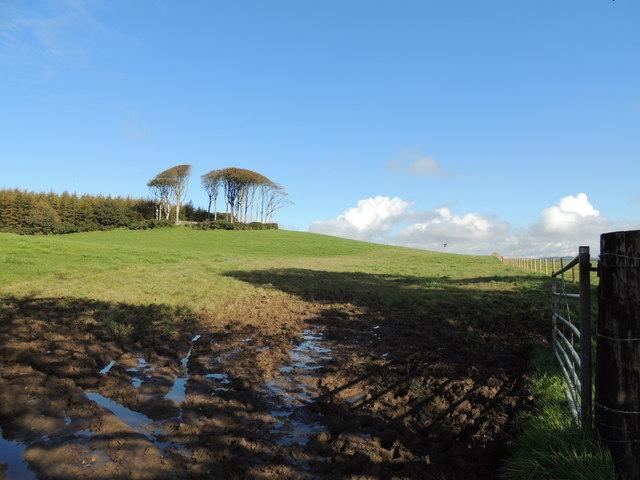 Farmland near Boreland Wood