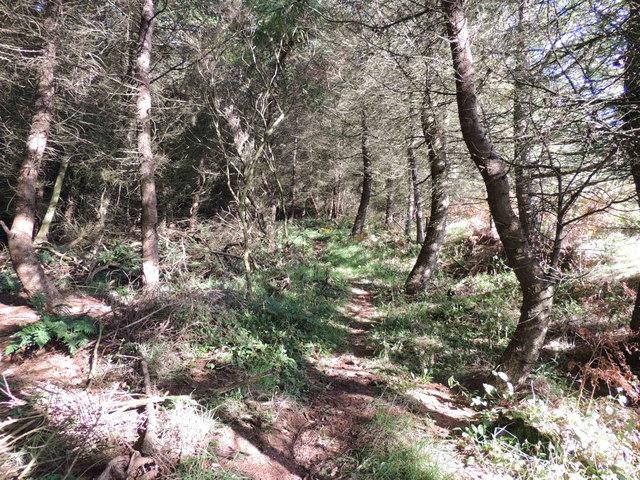 Boreland Wood