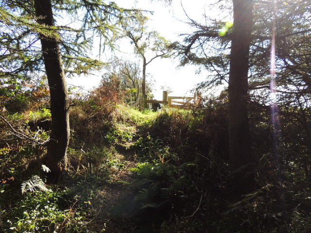 Mull of Galloway Trail in Boreland Wood