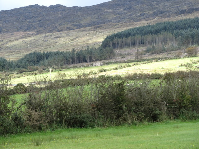 Partially cleared forest and ruined farmhouse on the lower slopes of Slieve Foye