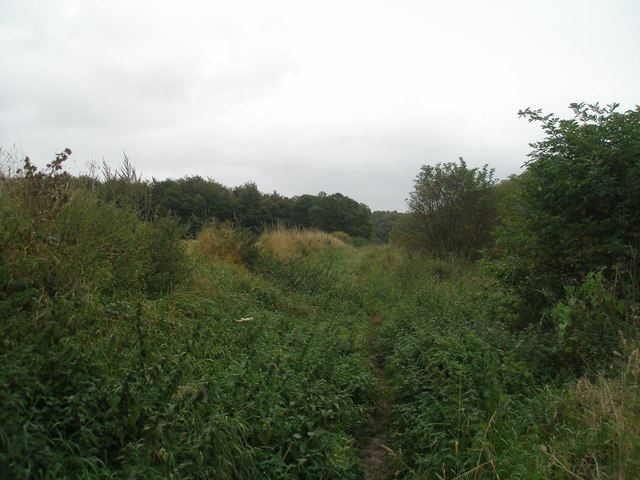 Footpath towards Hartly Wood