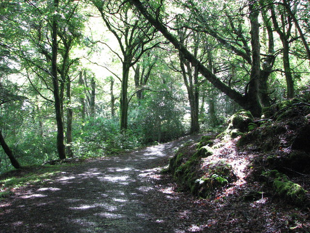 Ards Forest Park (5)
