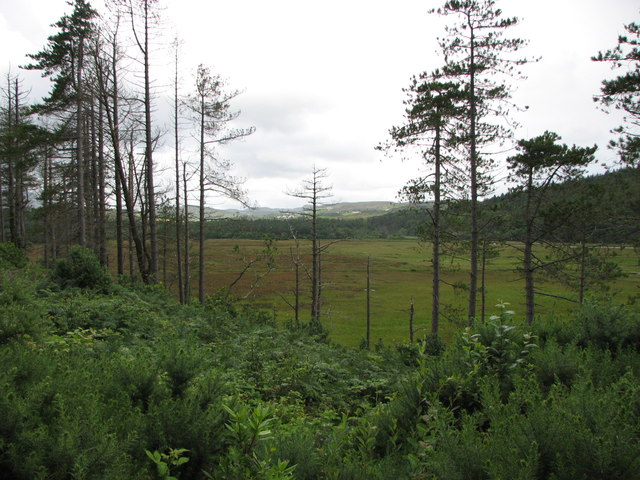 Ards Forest Park (6)
