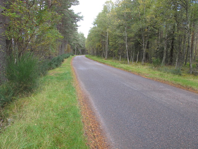 Minor Road Through Knockdow Wood