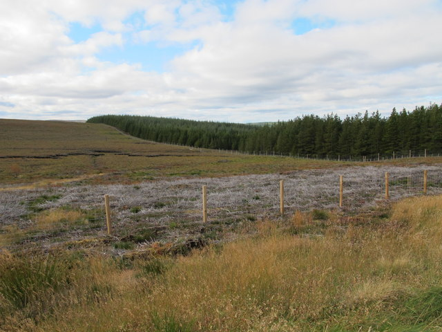 Moorland meets Forest Plantation on Cairn of Ballindean