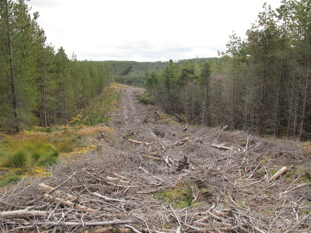 Forest Clearing Near Clashgour