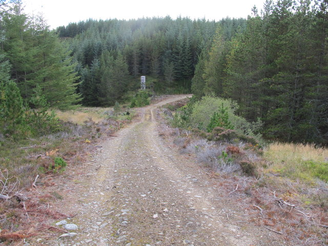 Forest Track and Watch Tower Near Carnachie