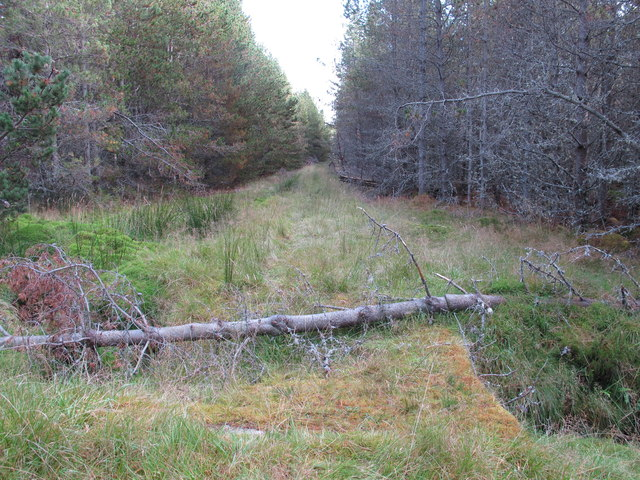 Forest Track near Rochuln