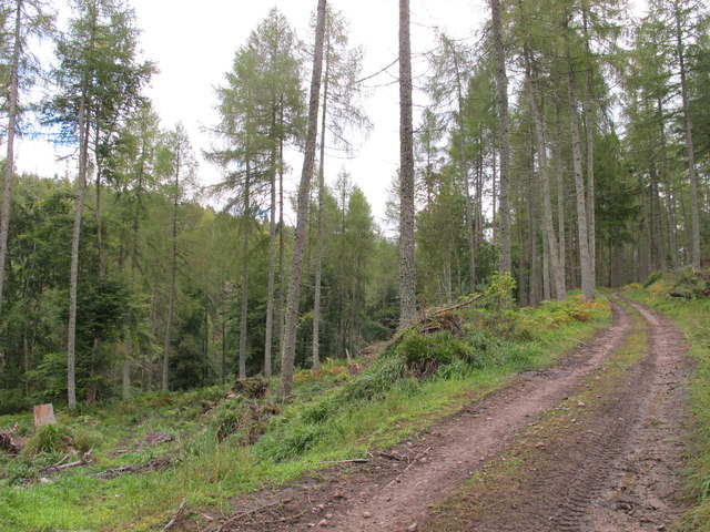 Forest Track in Phorp Wood