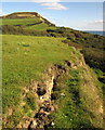 SY3992 : Slippage by the coast path at Broom Cliff by Derek Harper