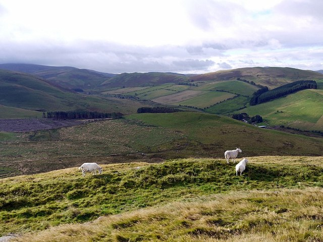 Shiel Knowe above Halterburn from Green Humbleton