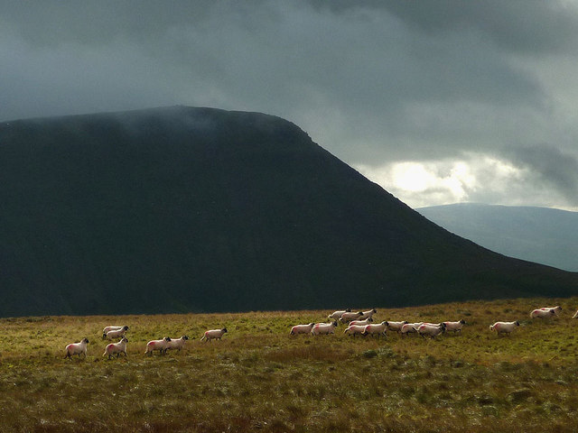 Running sheep on Mell Fell