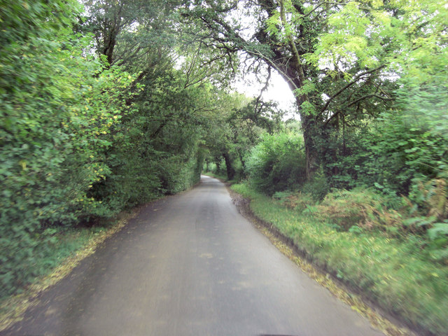 Steplake Lane runs through Sack Copse