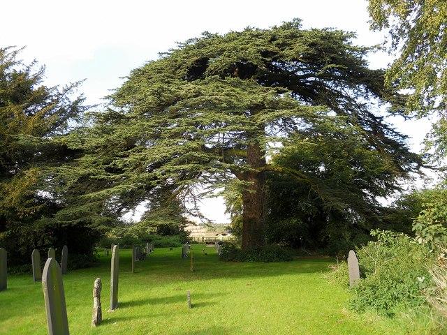 Cotesbach Churchyard