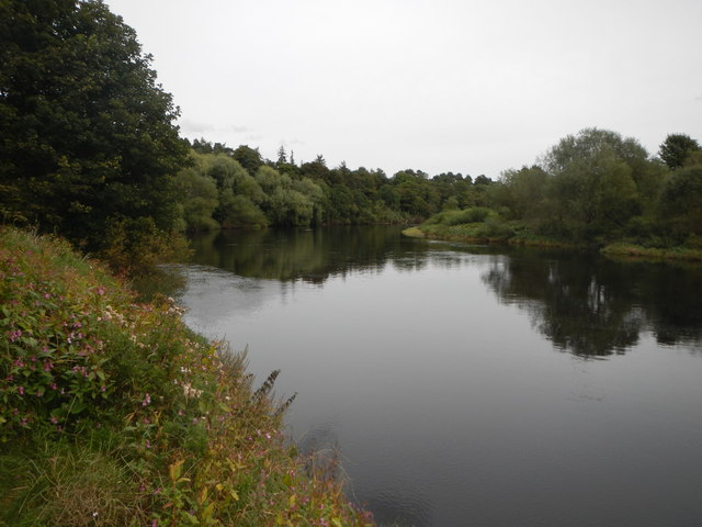 The River Tyne and Alder Wood