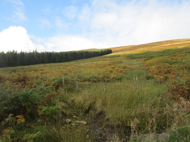 Bracken covered slope
