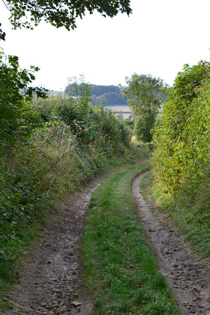 Sunken lane north of Winterslow