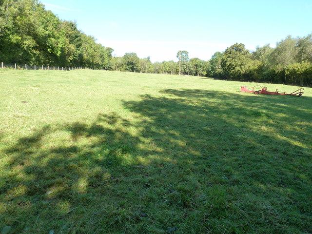 Grass field by Kill Devil Copse