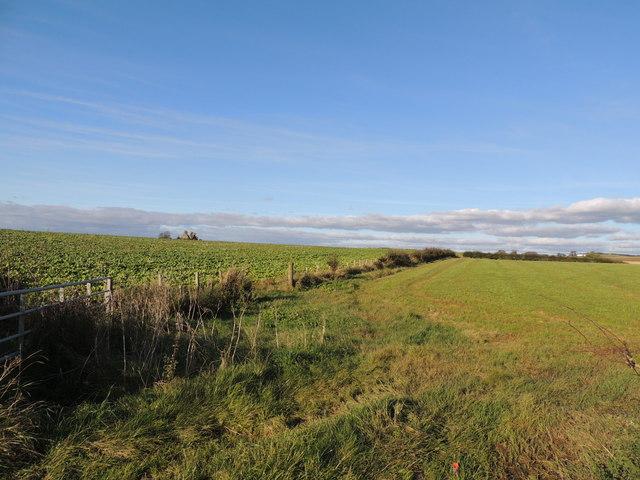 Farmland near Craigie Byre