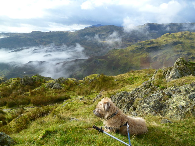Relaxing on Gibson Knott