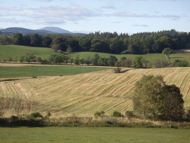 A new mown field beyond the Blacklinn Burn