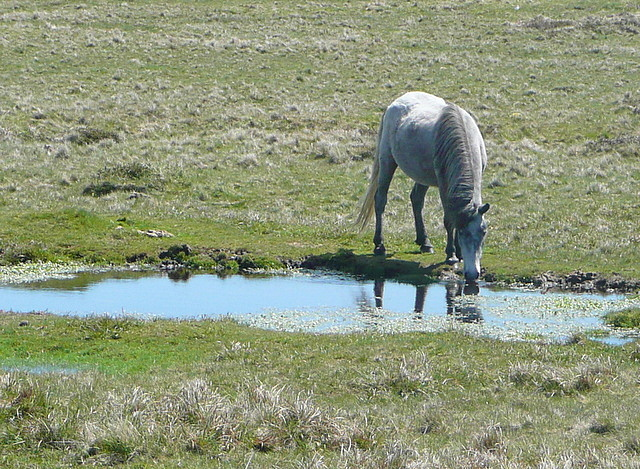 You can take a horse to water