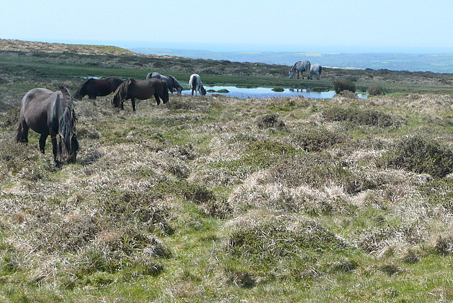 Ponies near the tramway