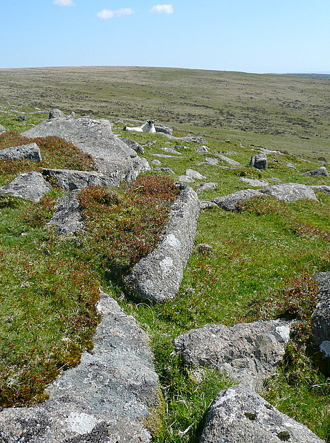 South of Sharp Tor