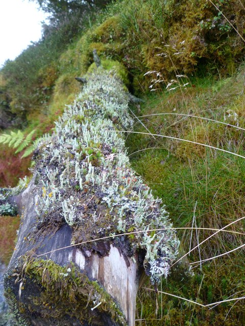 Log with Lichen