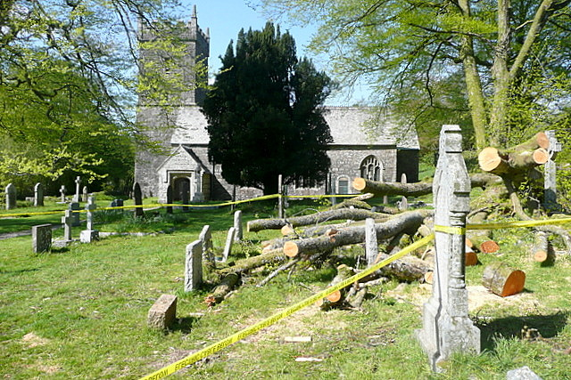 Harford churchyard, storm damage (3)