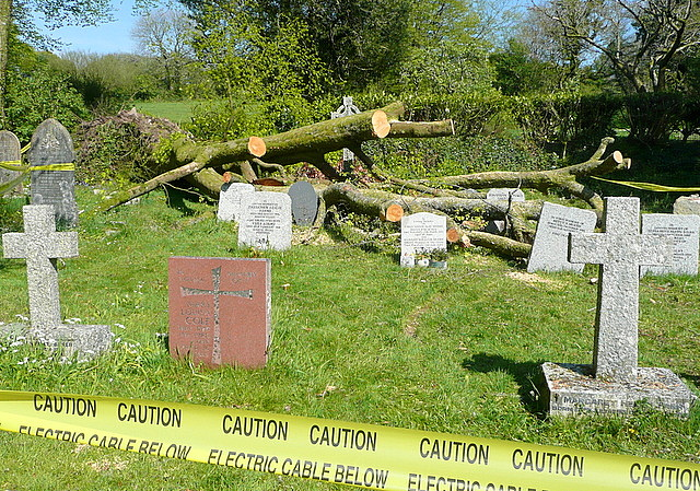 Harford churchyard, storm damage (4)